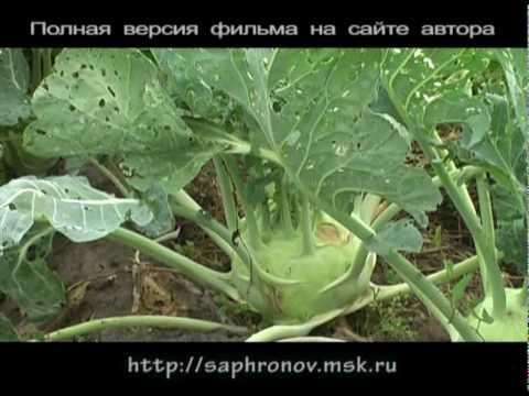 Огород (капуста) в родовом поместье. 7 часть