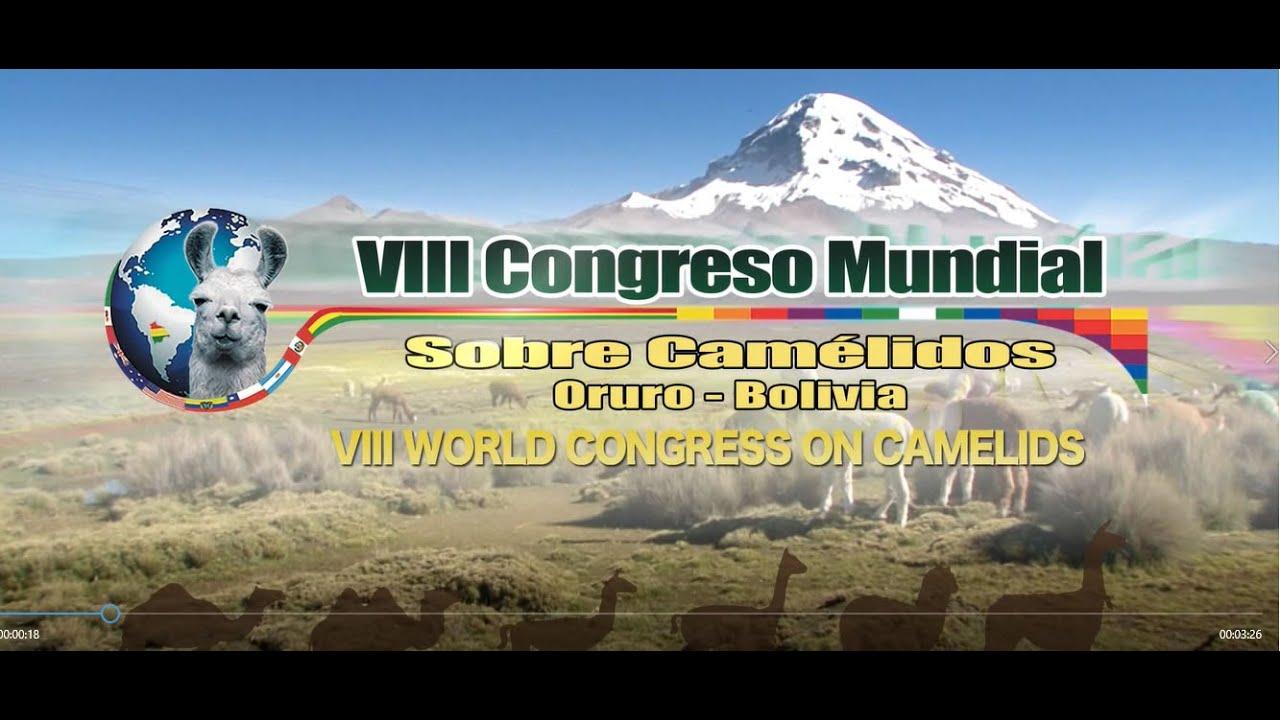 Resultado de imagen para congreso de camelidos en oruro