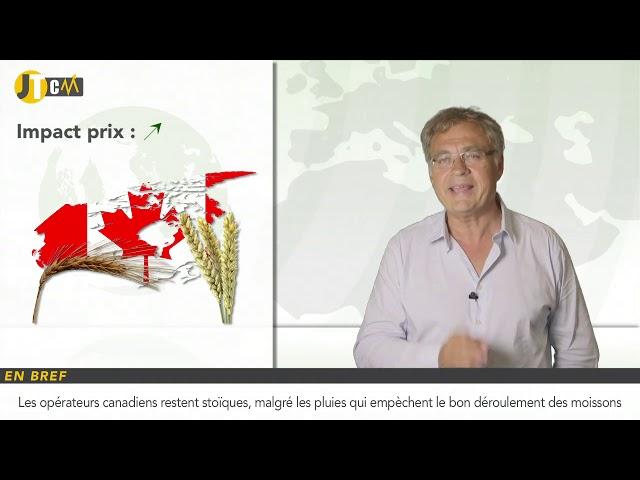 Un record de production de blé tendre pour la France !