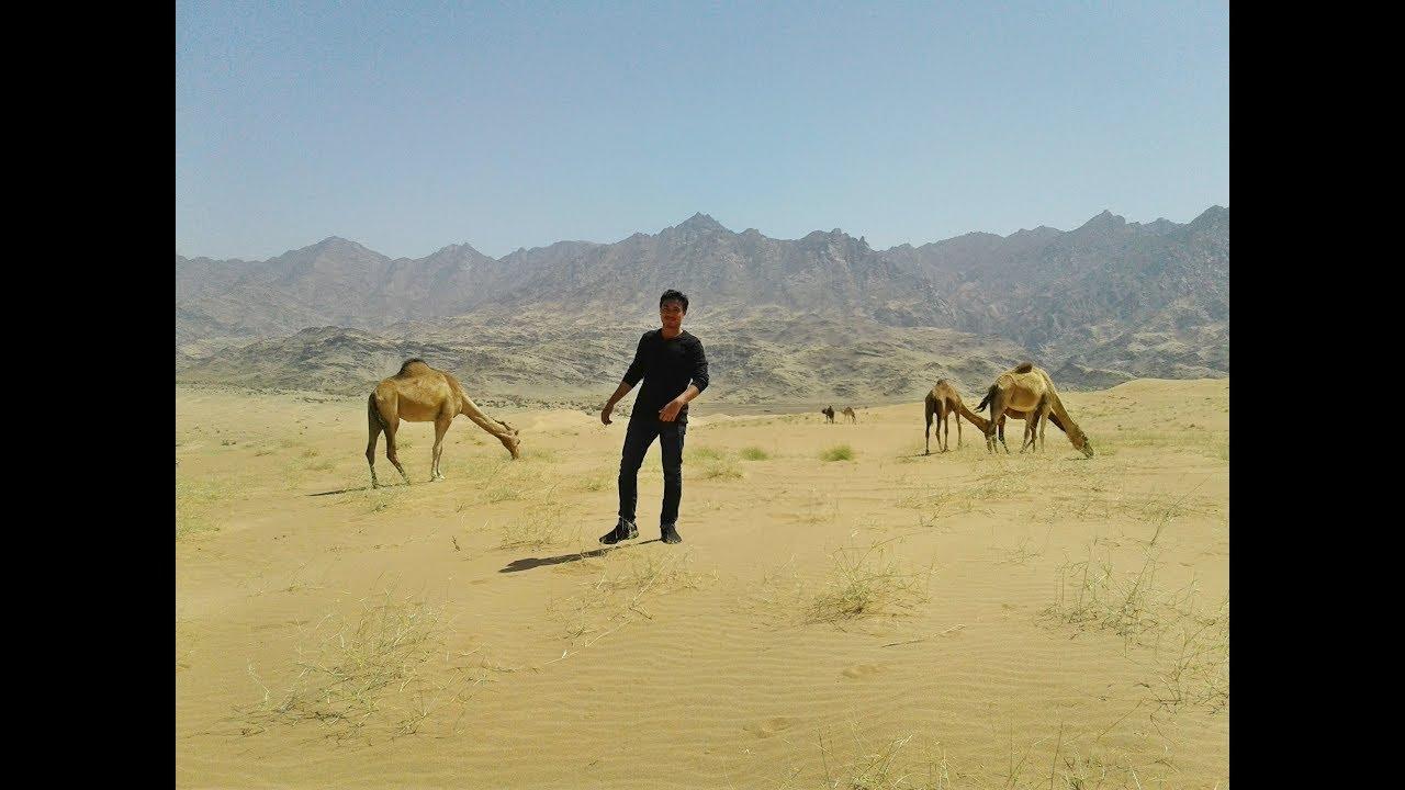 সৌদিয়ারব মরুভূমি  পিকনিক ,Saudiab Desert Picnic