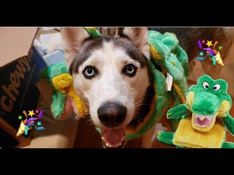 mally's-gators!🐊-birthday-gifts-01🎁