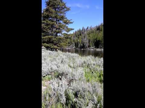 Elk crossing at Yellowstone