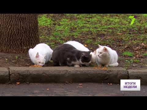 Новости 7 канал Одесса: Защита котам и запрет алкоголю: итоги сессии Одесского горсовета