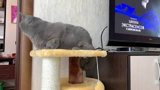 Приколы с Котами - Смешные коты 2019 |  ПРОБУЙ НЕ СМЕЯТЬСЯ!