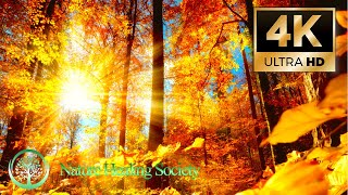 Morning Meditation Music 💖Begin Your Day Happy \u0026 Positive 4K - 528Hz Love Healing Dna Music Movie
