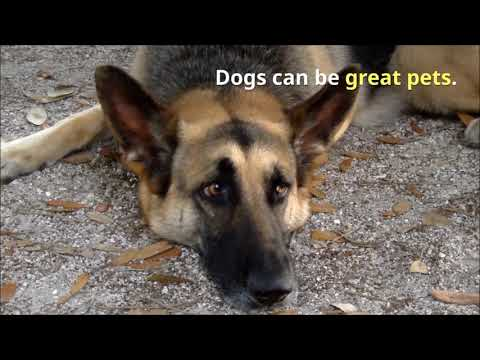 zak-george's-dog-training-revolution-new-puppy-these-tips-should-help!-what-you-must-know