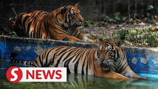 Zoo Negara received close to RM12mil in donations within the past year