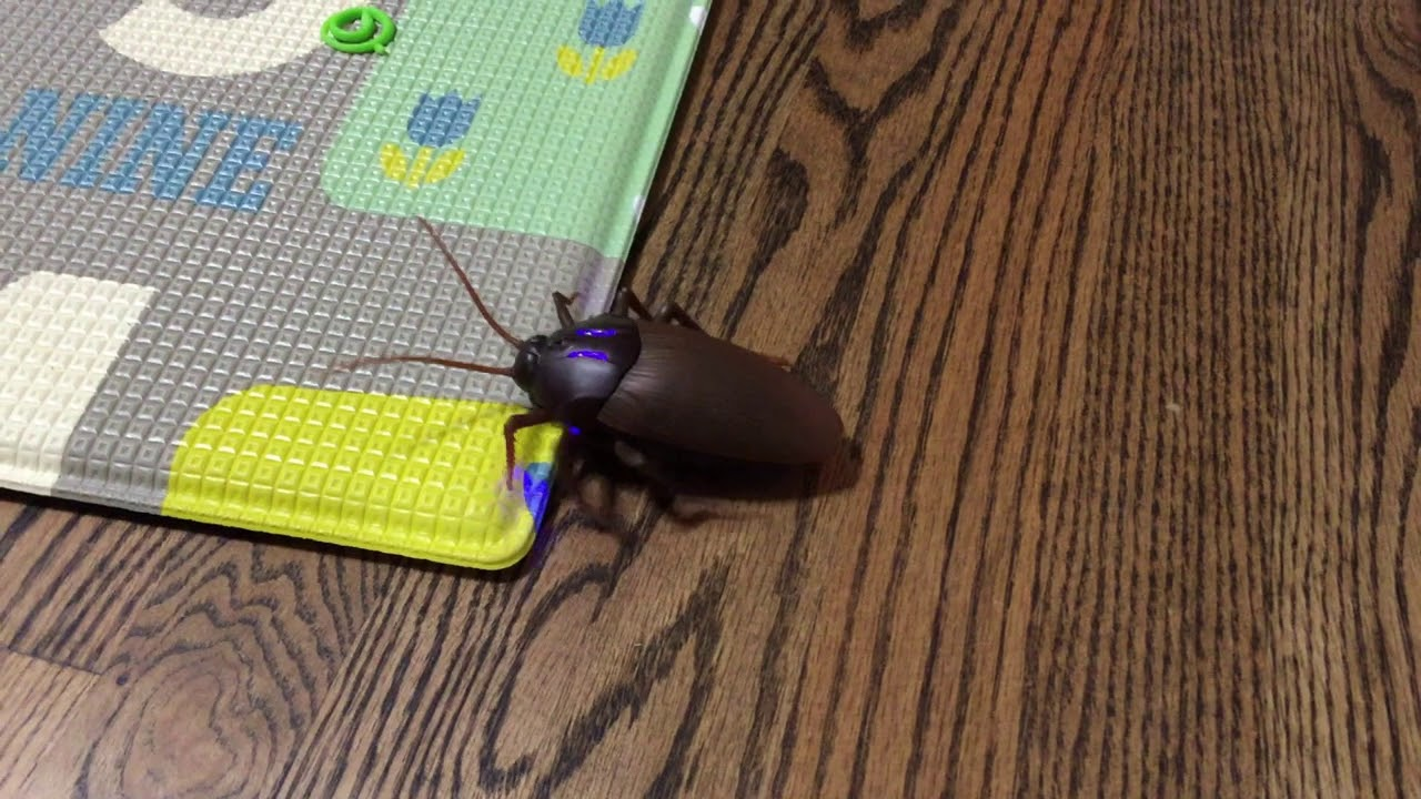 realistic rc cockroach