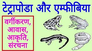 All about Amphibians | मेंढ़क, टोड, सैलामेंडर आदि का चित्र | Tetrapoda and Amphibia in hindi
