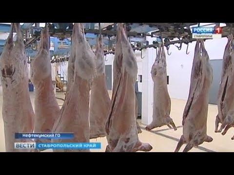 Ставропольскую баранину пробуют в Иране