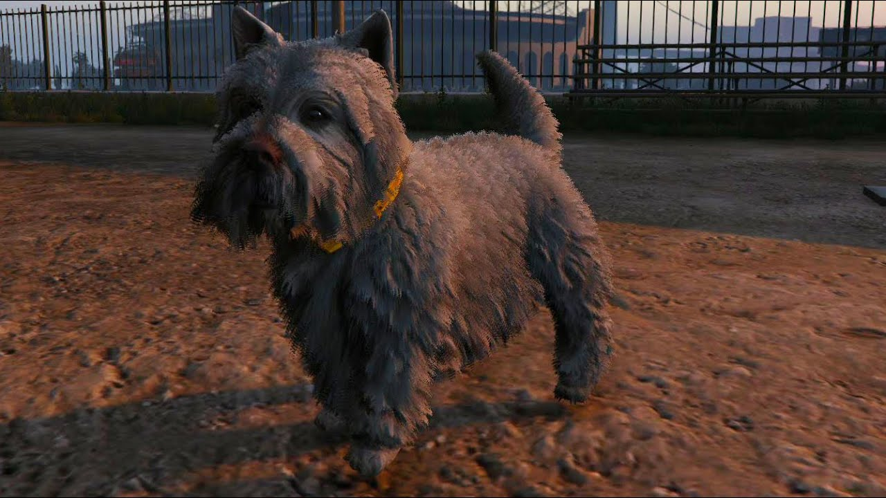 Franklins dog and other dogs in GTA V? - GTA V - GTAForums |Gta 5 Dog Breeds