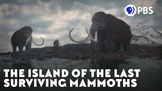 The Island of the Last Surviving Mammoths