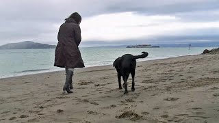 National Park Service Drops Opposition To Off-Leash Dogs At GGNRA