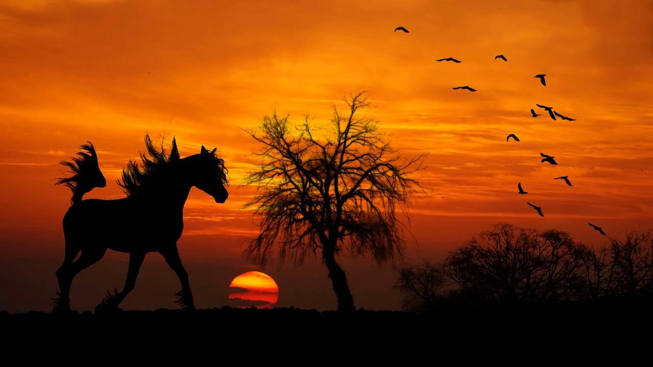 Beautiful Indian Girl Hd Wallpapers 1080p The Relaxing Sound Of A Horse Walking Clip Clop Horses