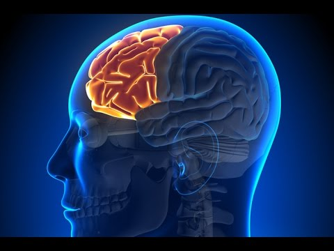 human skull diagram symptoms associated with temporal lobe epilepsy youtube ear skull diagram