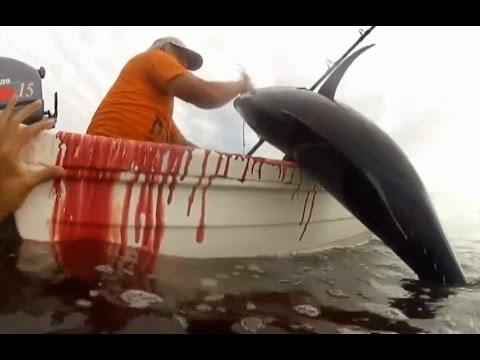Ra biển câu cá không ngờ bắt được Cá Ngừ cực to
