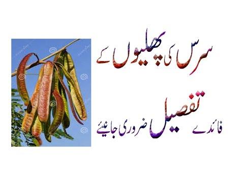 Siris, Albizia Lebbeck,Shirish Ki Phali Ke Faede Mzeed Next Video Me Urdu  Hindi Punjabi