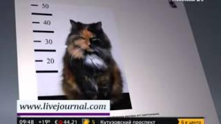 Британская семья извинится перед соседями за поведение своего кота