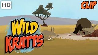 Wild Kratts - Stranded In The Desert