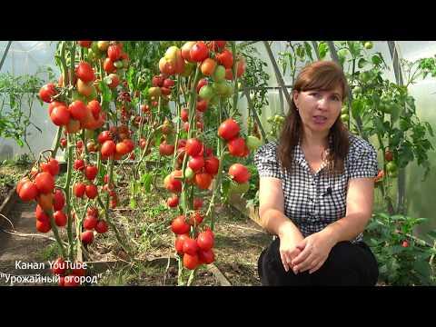 СУПЕР УРОЖАЙНЫЙ ТОМАТ ВЕЛИКОСВЕТСКИЙ!ЛУЧШИЕ ТОМАТЫ СЕЗОНА! | выращивание | урожайный | томатами | помидоры | томатов | урожай | томаты | огород | лучшие | томат