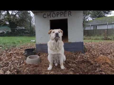 """Fences For Fido """"Chopper: Our First Love"""""""