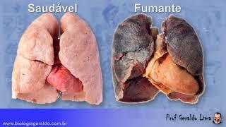 Respiração 2 - Pulmões