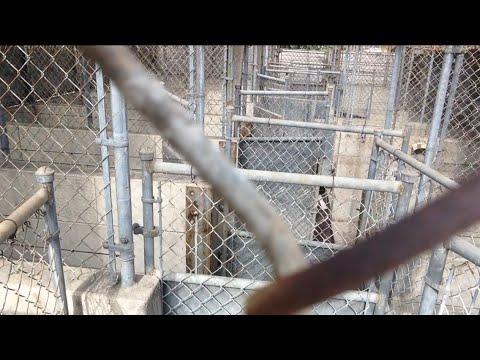TDW 1133 - Abandoned Veterinarian Office / Animal Shelter