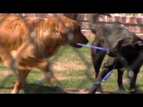 El imperdible video de la historia de amistad entre dos perros que se hicieron inseparables