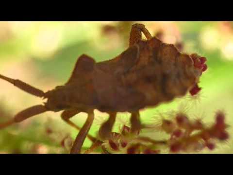 Микросъемка садовых насекомых жуки, медведка, личинка комара, улитка, пауки
