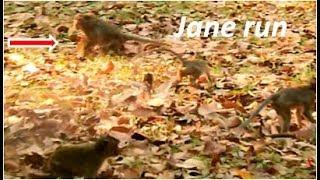 Wow | Mom JANE bite Janet cos angry hurt Janna | little monkey help Janet bite Jane