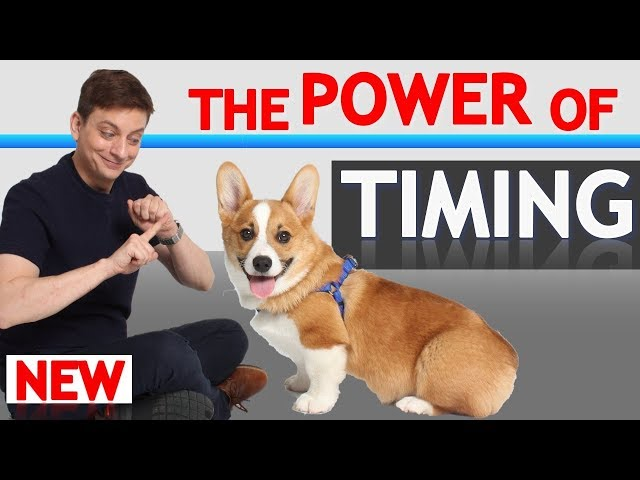 Understand THIS and Your Dog Will Learn Faster (How to Achieve Perfect Timing!)