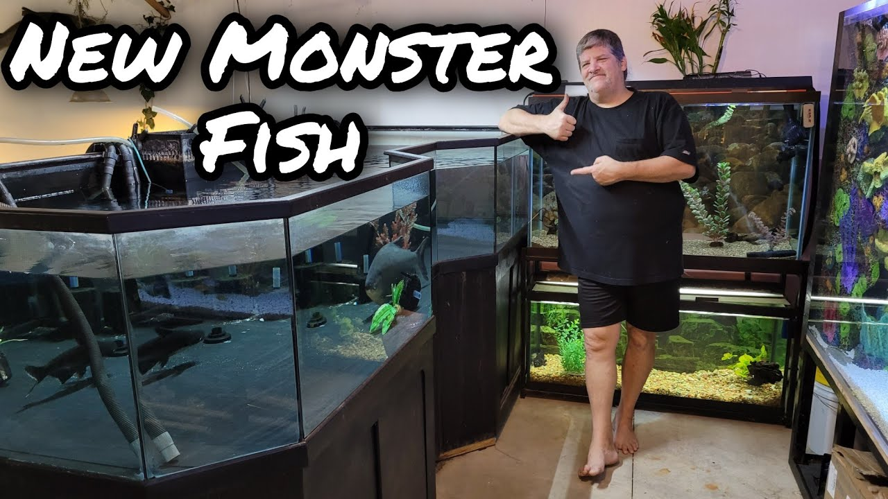 Tear jerking Surprise From One of Our Members and Predatory Fins - Monster Fish Unboxing