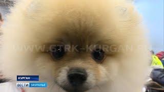 Питомцы со всей России: в Кургане прошла выставка собак