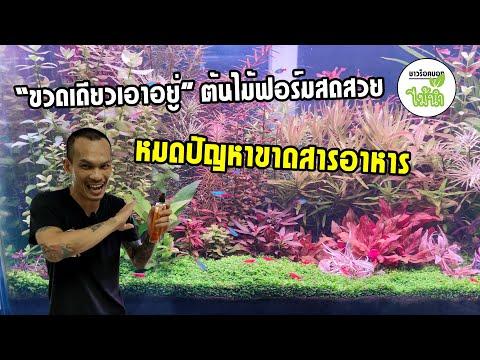 ปุ๋ยไม้น้ำหนึ่งเดียวในไทย ที่รวมธาตุหลักธาตุรองธาตุเสริม 21 ชนิดไว้ในขวดเดียว   ชาวร็อคบอกไม้น้ำ
