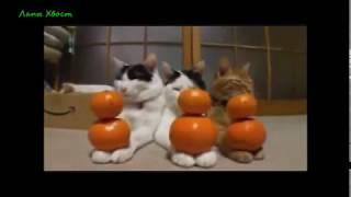 Приколы с животными, Видео приколы про животных youtube Смотреть интересное видео!