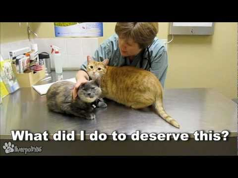 Cats Demand Attention From Vet