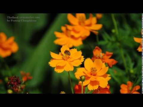 ครูแสง : เรียนลัดถ่ายภาพ 11 ดอกไม้ไทย (Thai Flowers Movie 5)