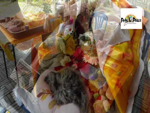 Snoopy passed on 03 Jan 2017. Pet funeral bereavement malaysia pets in peace