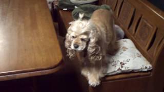 我家のお犬様。