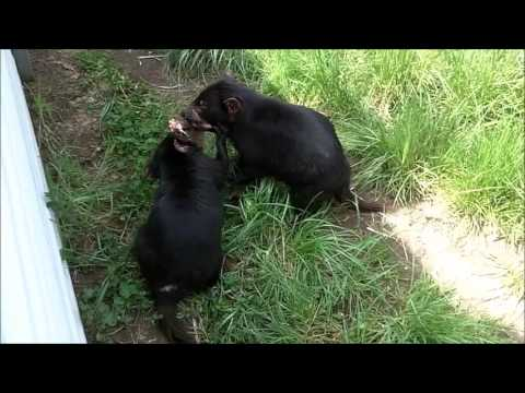 Tasmania Zoo Launceston Australia 2015