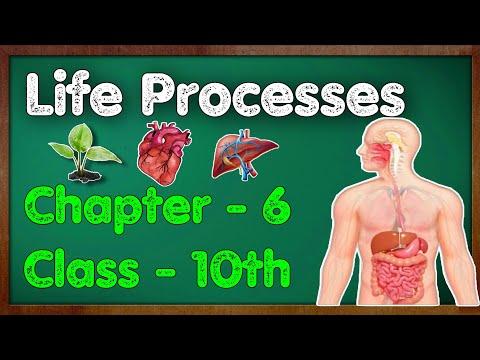 Life Processes Class 10 Science Biology | CBSE NCERT KVS
