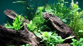 """Красивый аквариум вместе с """"Tetra"""". Тишина. День 38"""