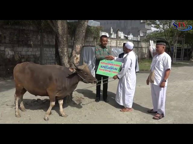 Bantuan Hewan Qurban Oleh Pemerintah kab. Jayapura | Sentani TV