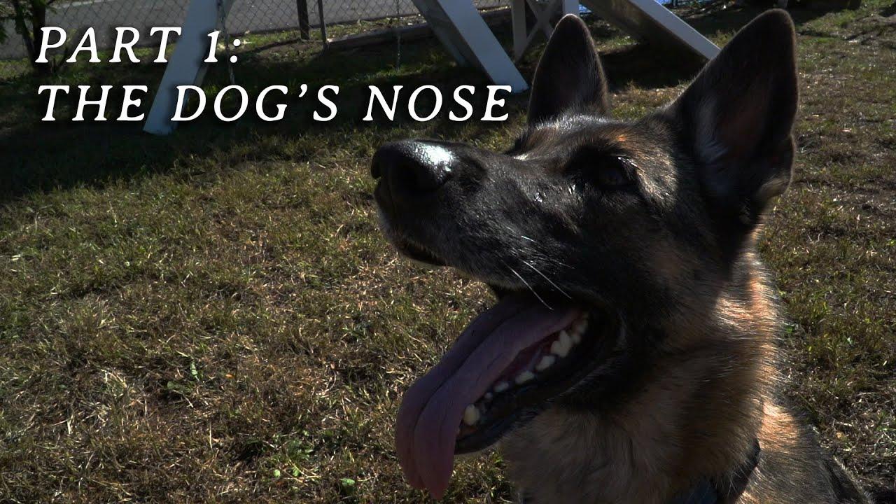Psi nos czuje nowotwór