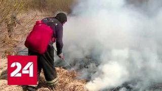 На Дальнем Востоке площадь пожаров за сутки увеличилась в шесть раз