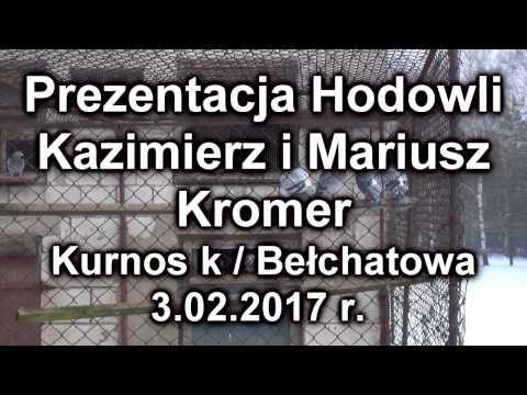 Kazimierz i Mariusz Kromer - Hodowla 3.02.2017 r. oddz. Bełchatów