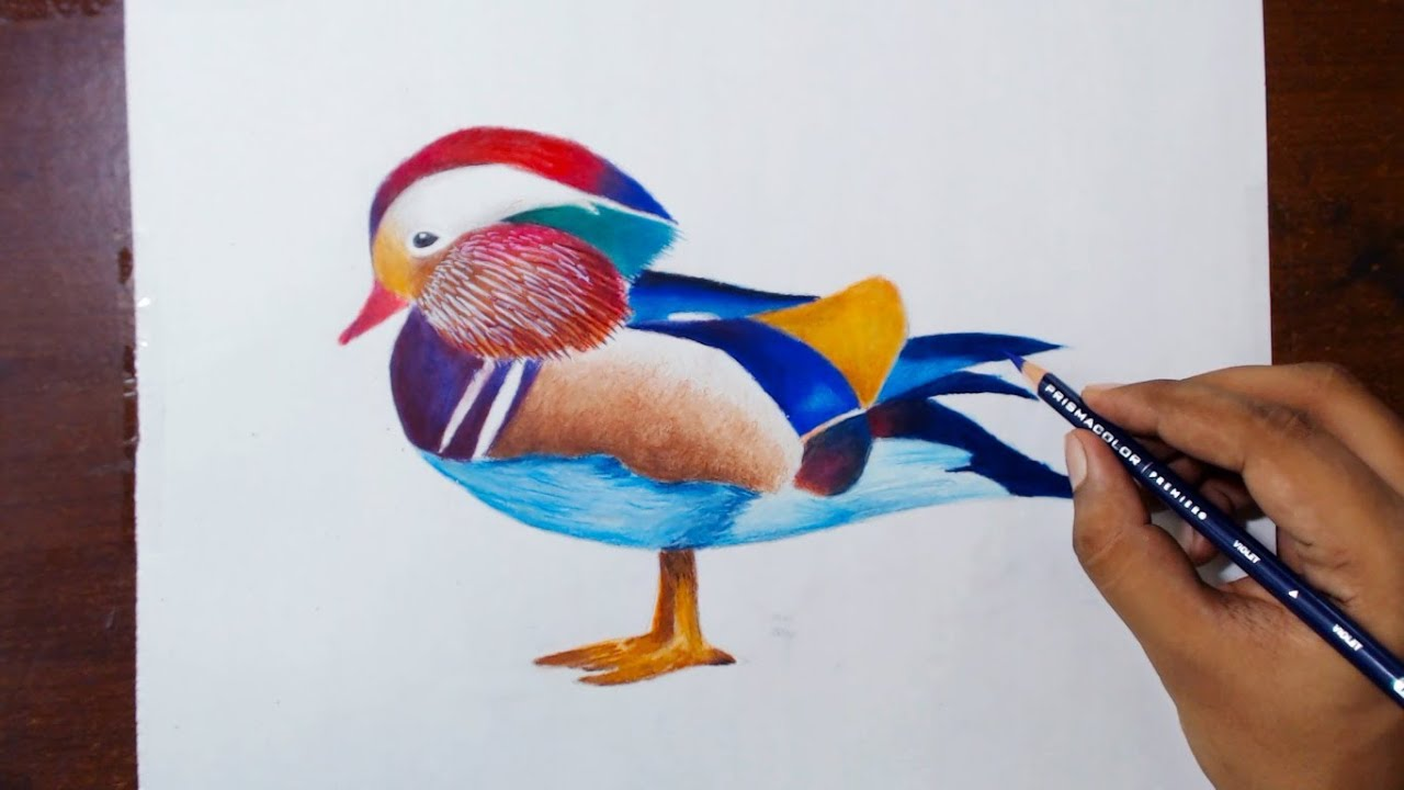 Drawing A Mandarin Duck