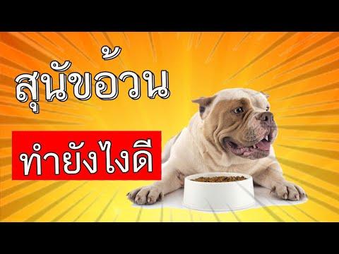 สุนัขอ้วน ทำไงดี อาหารลดน้ำหนักสุนัขทำเอง อาหารเม็ด สุนัข สูตรลดน้ำหนัก อาหารลดน้ำหนักสุนัข
