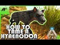 How To Tame A Hyaenodon(EASY!)- Ark Survival Evolved Xbox One- Kamz25