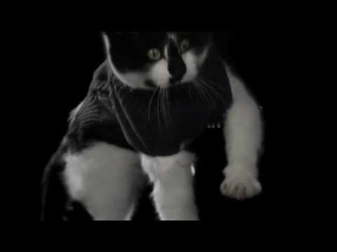 Cats falling in slow motion (240 FPS!) - Everyone's Famous Teaser One